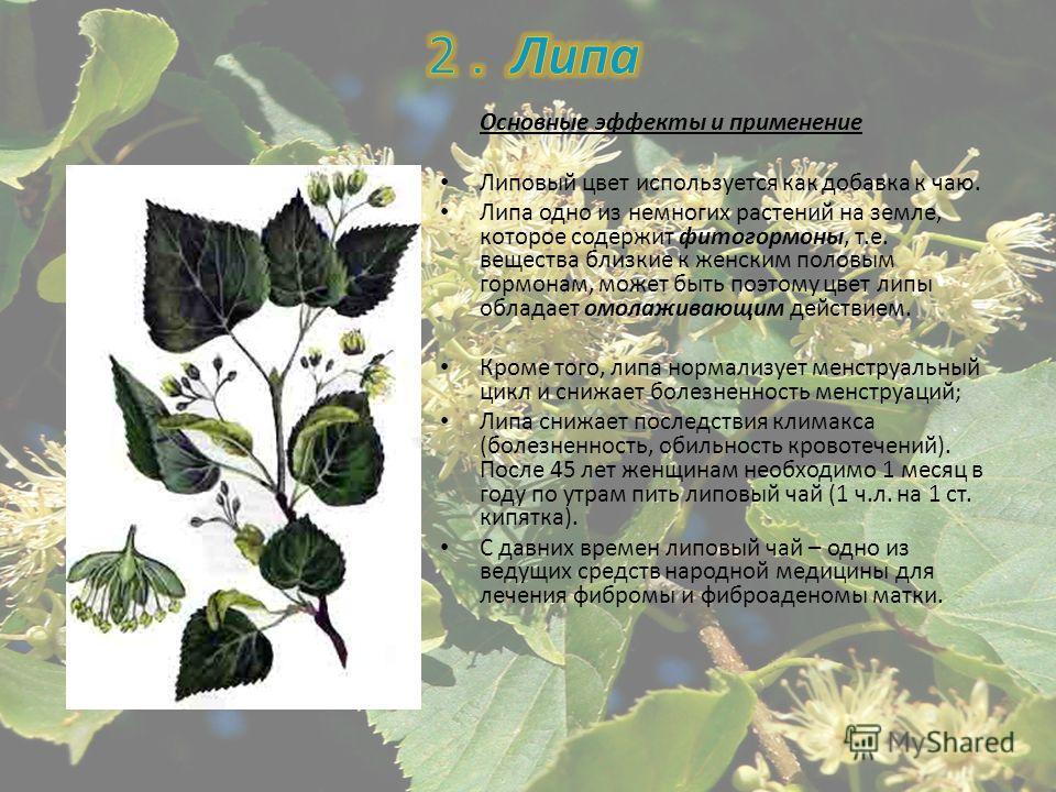 Основные эффекты и применение Липовый цвет используется как добавка к чаю. Липа одно из немногих растений на земле, которое содержит фитогормоны, т.е. вещества близкие к женским половым гормонам, может быть поэтому цвет липы обладает омолаживающим де