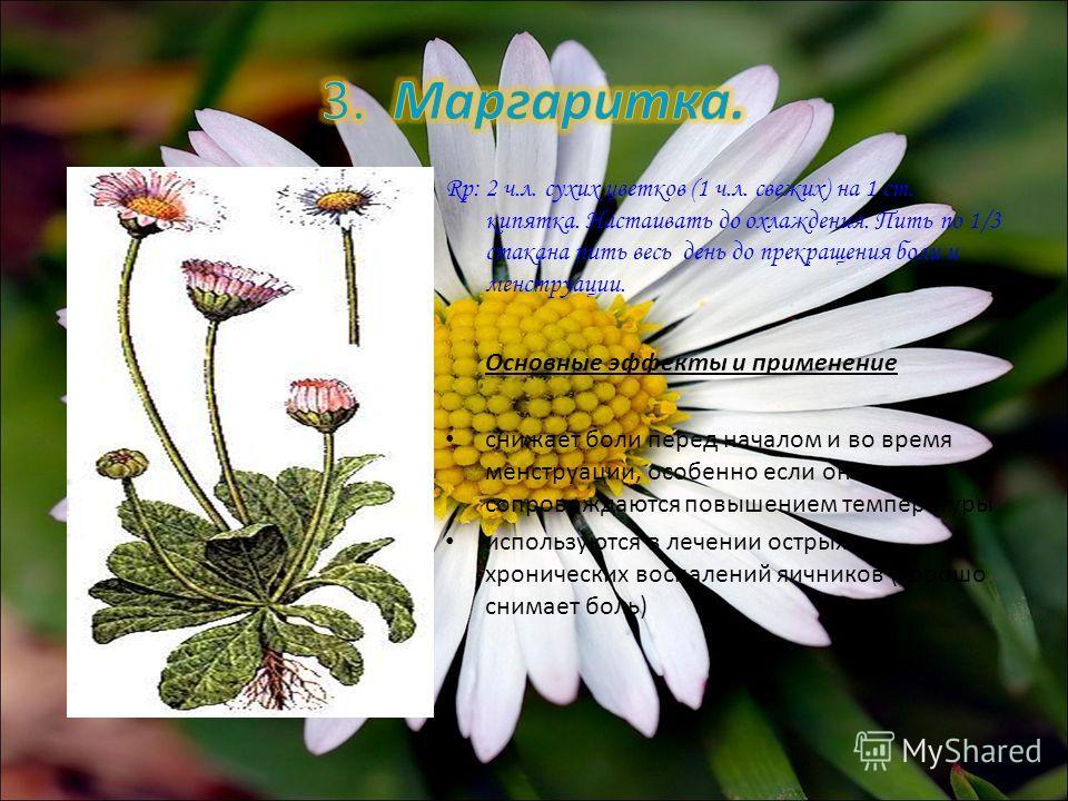 Rp: 2 ч.л. сухих цветков (1 ч.л. свежих) на 1 ст. кипятка. Настаивать до охлаждения. Пить по 1/3 стакана пить весь день до прекращения боли и менструации. Основные эффекты и применение снижает боли перед началом и во время менструации, особенно если