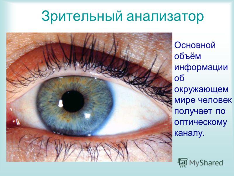 Зрительный анализатор Основной объём информации об окружающем мире человек получает по оптическому каналу.