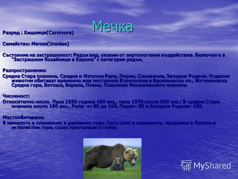 Мечка Мечка Разред : Хищници(Carnivora) Семейство: Мечки(Ursidae) Състояние на застрашеност: Рядък вид, уязвим от анртопогенни въздействия. Включен е в