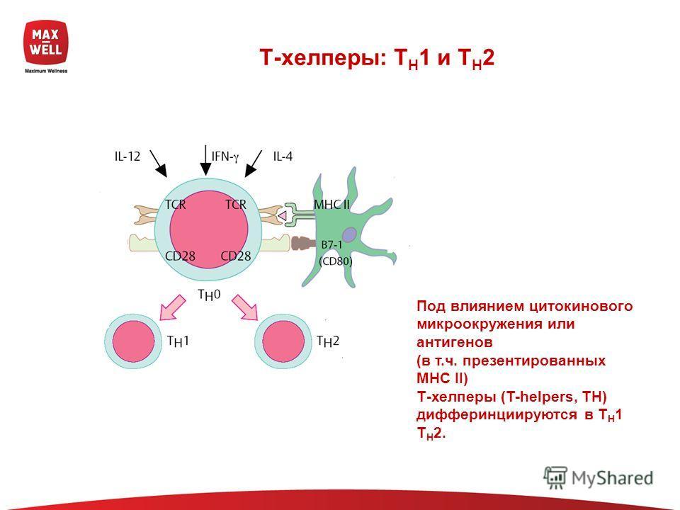 Т-хелперы: T H 1 и T H 2 Под влиянием цитокинового микроокружения или антигенов (в т.ч. презентированных МНС II) Т-хелперы (T-helpers, TH) дифферинциируются в T H 1 T H 2.