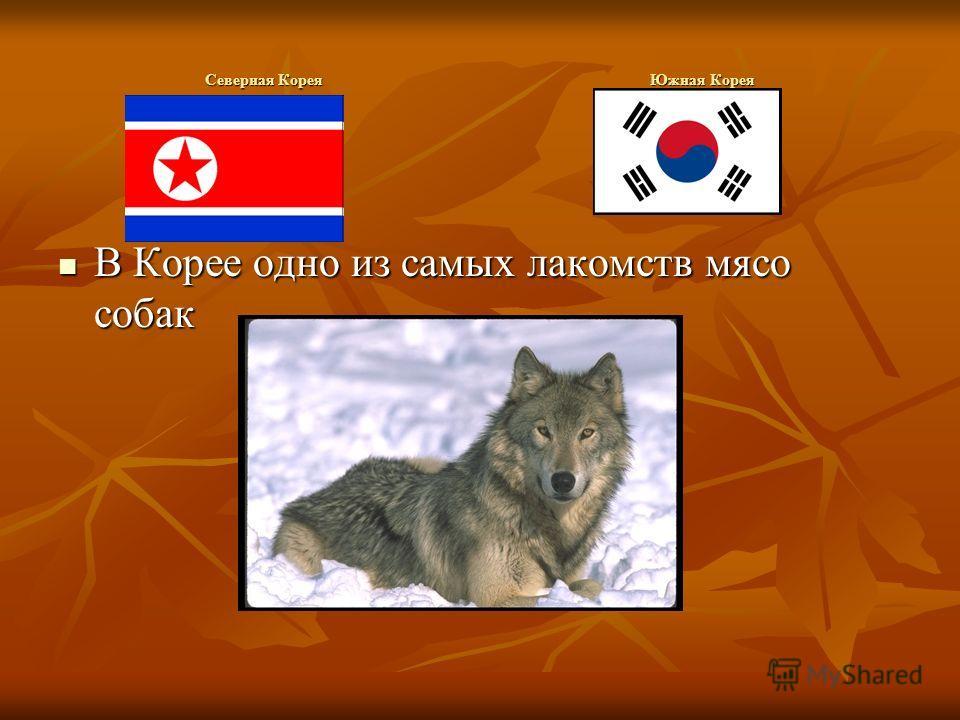 Северная Корея Южная Корея В Корее одно из самых лакомств мясо собак В Корее одно из самых лакомств мясо собак