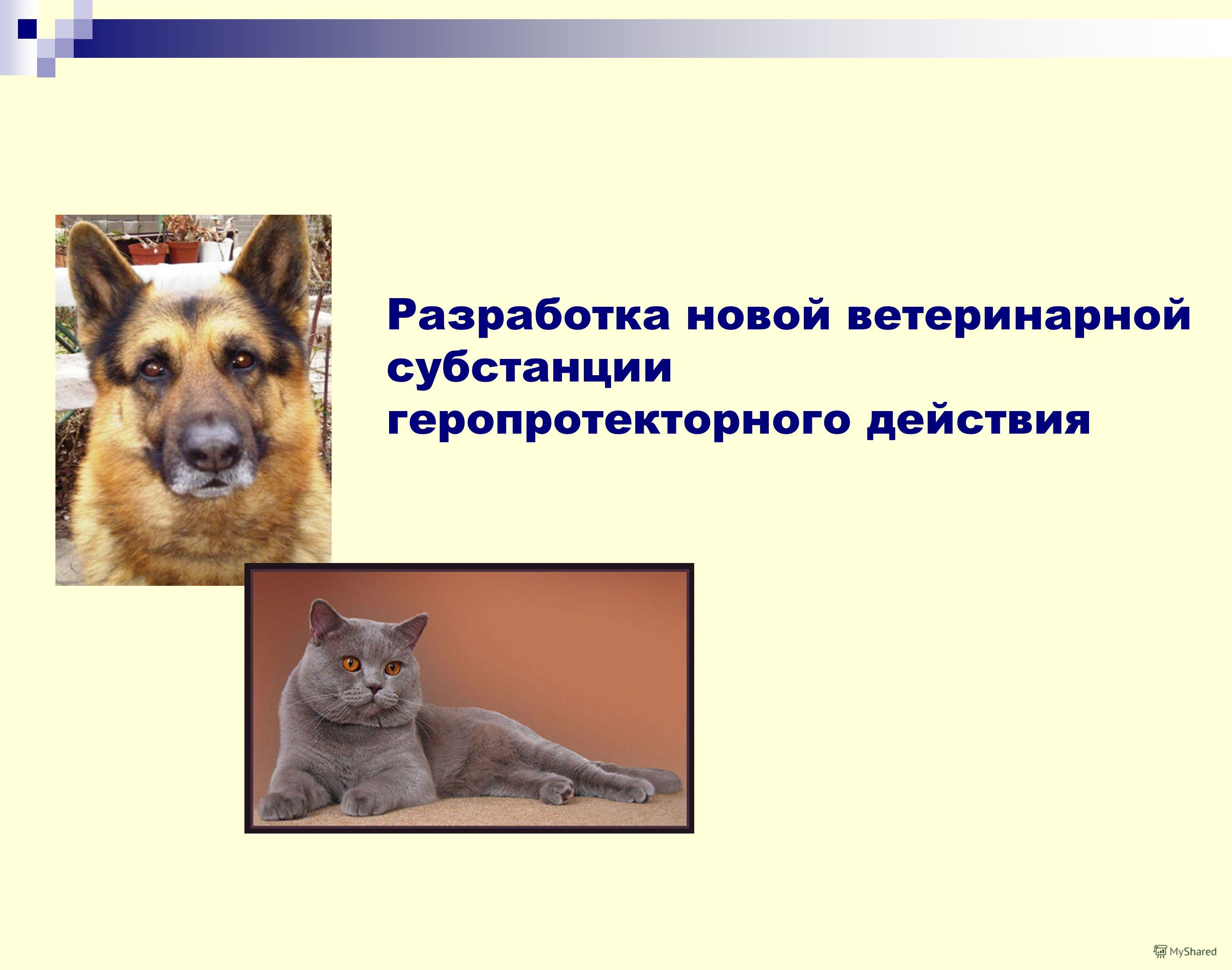 Разработка новой ветеринарной субстанции геропротекторного действия
