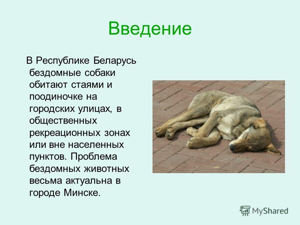 Введение В Республике Беларусь бездомные собаки обитают стаями и поодиночке на городских улицах, в общественных рекреационных зонах или вне населенных пунктов. Проблема бездомных животных весьма актуальна в городе Минске.