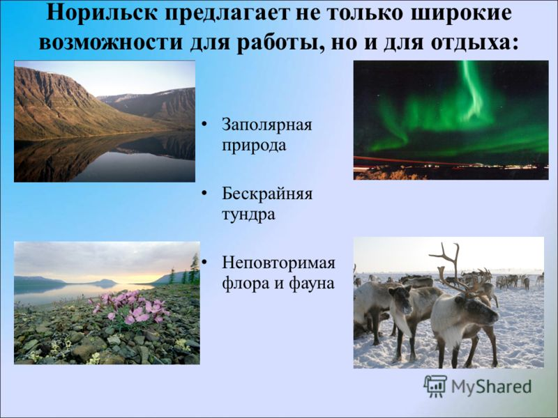 Норильск предлагает не только широкие возможности для работы, но и для отдыха: Заполярная природа Бескрайняя тундра Неповторимая флора и фауна