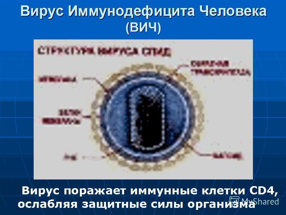 В России к августу зарегистрировано более 140 тыс. ВИЧ-инфицированных, в том числе около 55 тыс. только за 7 месяцев текущего года. В Ставропольском крае за 10 месяцев зарегистрировано 179 случаев ВИЧ-инфекции и ведущим фактором заражения, как и в др