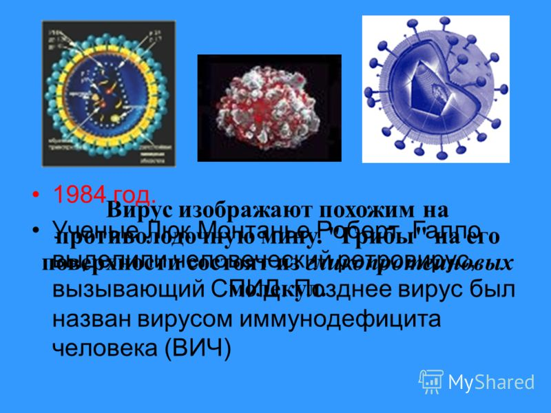 Первые массовые заражения произошли в конце 1970-х годов. Эпидемия продолжает расти. Наука преодолела страх и смогла частично победить в борьбе с вирусом. Началом эпидемии считается 1981 год.