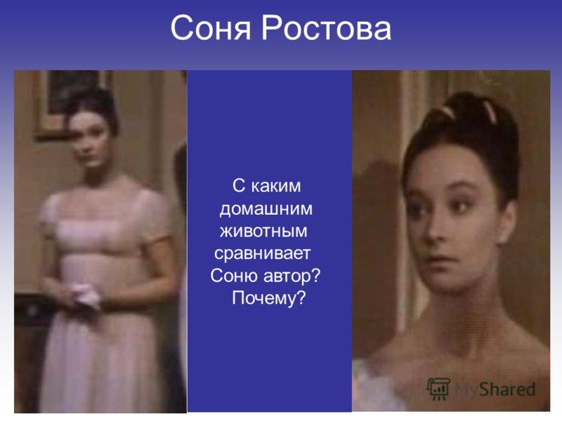 Соня Ростова С каким домашним животным сравнивает Соню автор? Почему?
