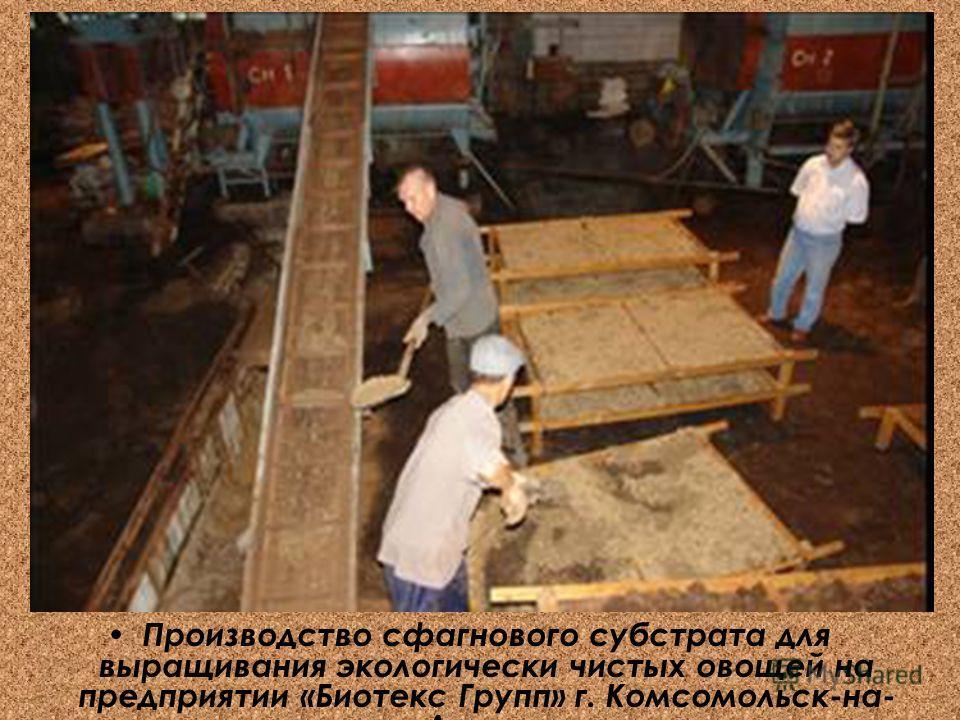 Производство сфагнового субстрата для выращивания экологически чистых овощей на предприятии «Биотекс Групп» г. Комсомольск-на- Амуре»