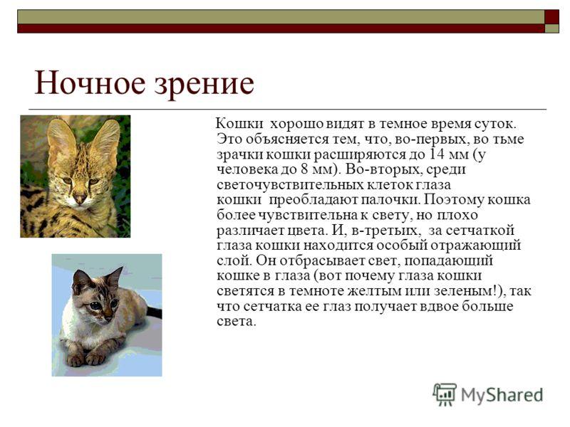 Ночное зрение Кошки хорошо видят в темное время суток. Это объясняется тем, что, во-первых, во тьме зрачки кошки расширяются до 14 мм (у человека до 8 мм). Во-вторых, среди светочувствительных клеток глаза кошки преобладают палочки. Поэтому кошка бол