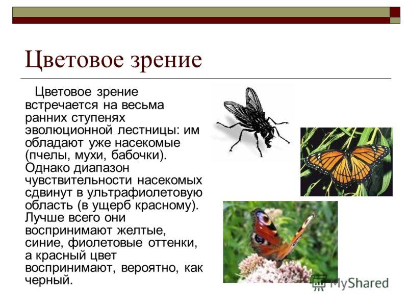 Цветовое зрение Цветовое зрение встречается на весьма ранних ступенях эволюционной лестницы: им обладают уже насекомые (пчелы, мухи, бабочки). Однако диапазон чувствительности насекомых сдвинут в ультрафиолетовую область (в ущерб красному). Лучше все
