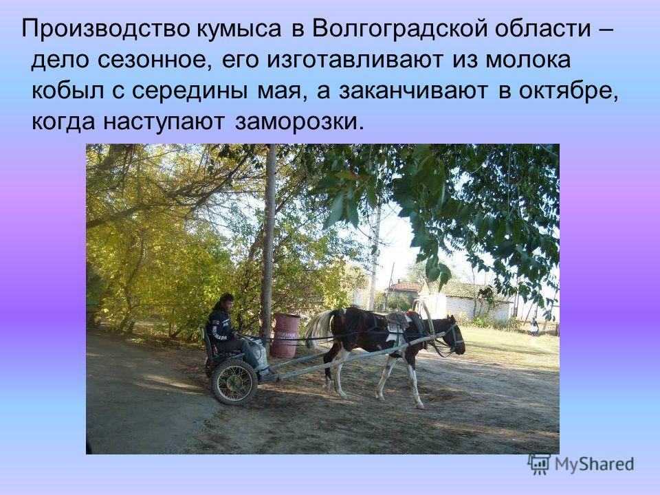 Производство кумыса в Волгоградской области – дело сезонное, его изготавливают из молока кобыл с середины мая, а заканчивают в октябре, когда наступают заморозки.