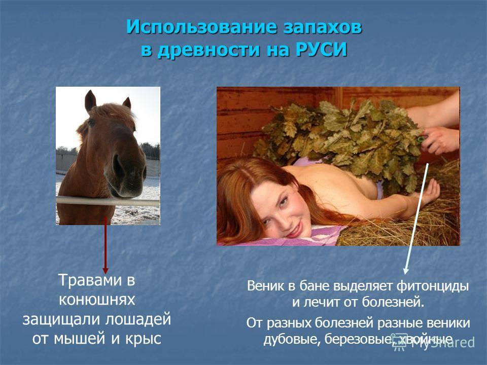 Травами в конюшнях защищали лошадей от мышей и крыс Веник в бане выделяет фитонциды и лечит от болезней. От разных болезней разные веники дубовые, березовые, хвойные Использование запахов в древности на РУСИ