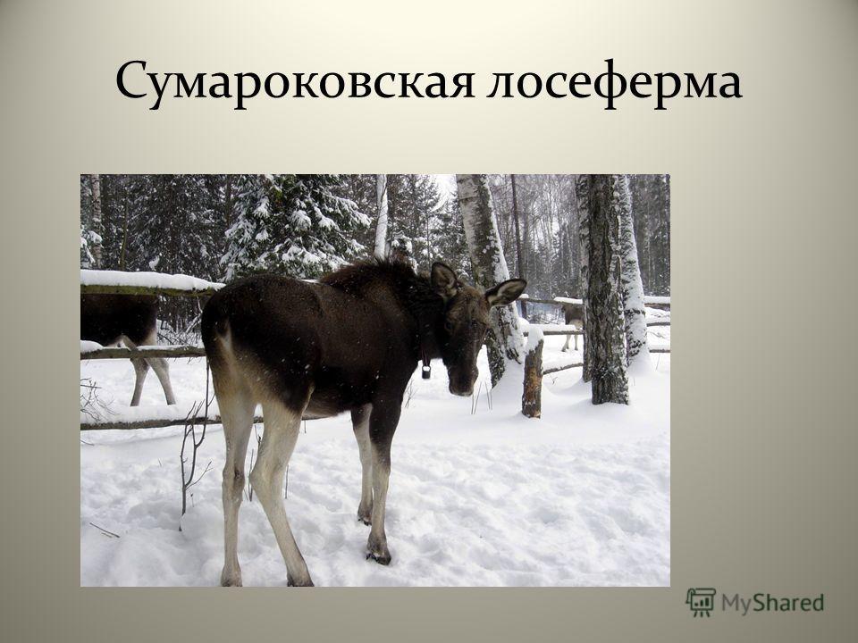 Сумароковская лосеферма