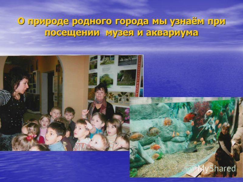 О природе родного города мы узнаём при посещении музея и аквариума