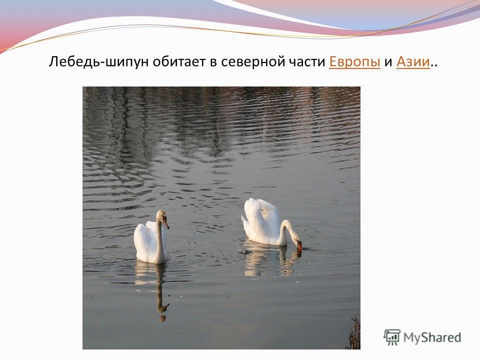Лебедь-шипун обитает в северной части Европы и Азии..ЕвропыАзии