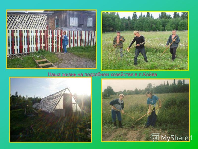 Наша жизнь на подсобном хозяйстве в п.Койва
