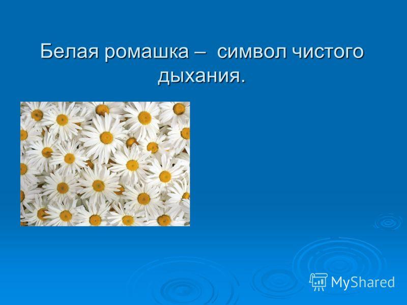 Белая ромашка – символ чистого дыхания.