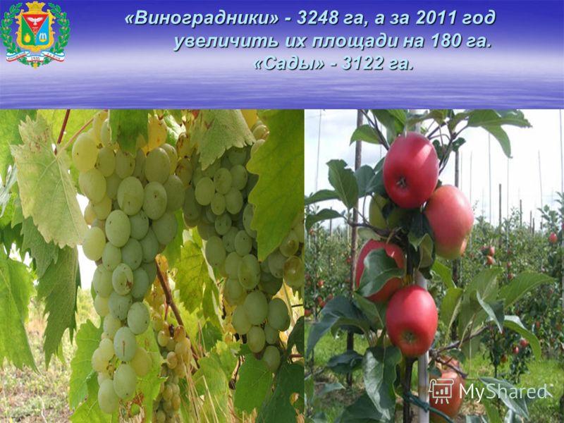 «Виноградники» - 3248 га, а за 2011 год увеличить их площади на 180 га. «Сады» - 3122 га. «Виноградники» - 3248 га, а за 2011 год увеличить их площади на 180 га. «Сады» - 3122 га.