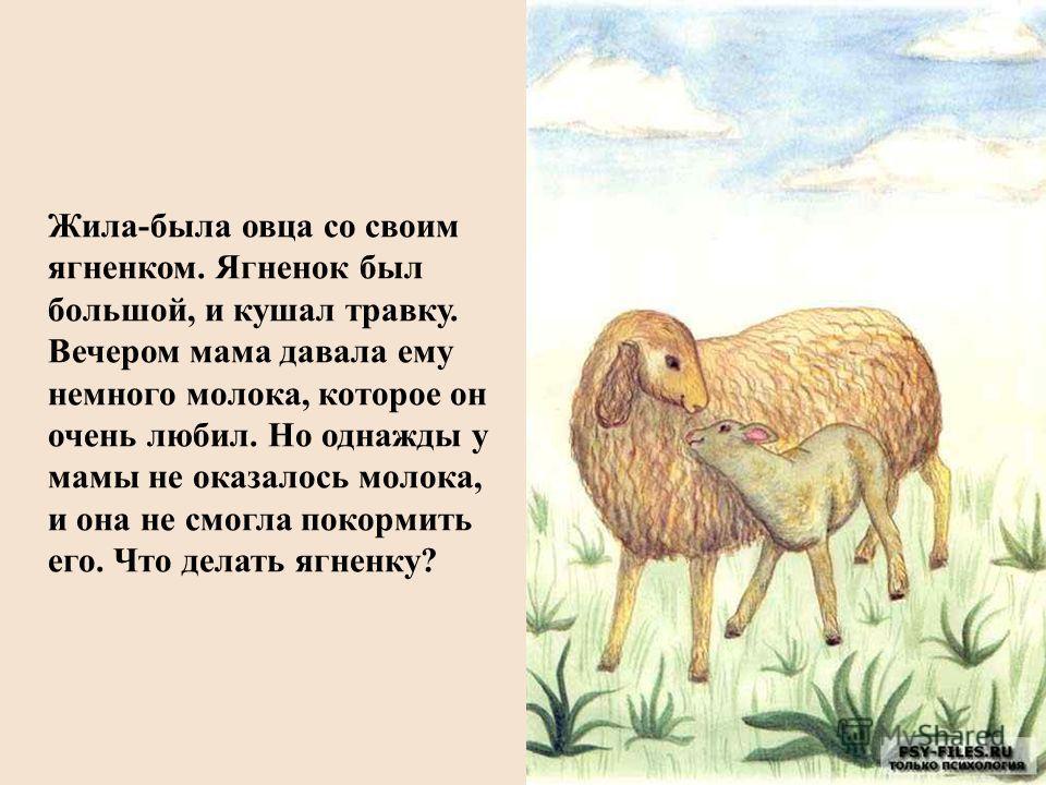 Жила-была овца со своим ягненком. Ягненок был большой, и кушал травку. Вечером мама давала ему немного молока, которое он очень любил. Но однажды у мамы не оказалось молока, и она не смогла покормить его. Что делать ягненку?