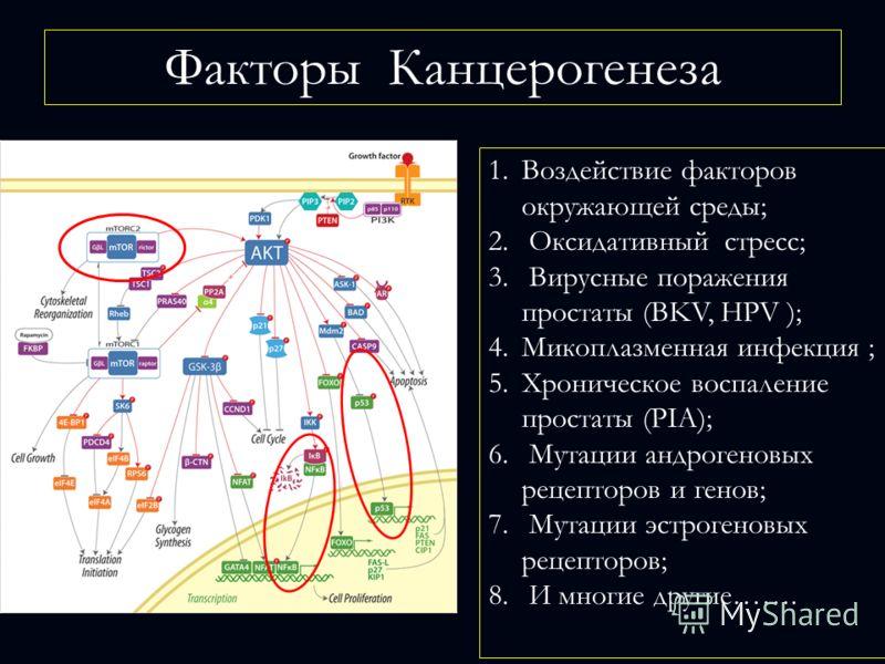 1.Воздействие факторов окружающей среды; 2. Оксидативный стресс; 3. Вирусные поражения простаты (BKV, HPV ); 4.Микоплазменная инфекция ; 5.Хроническое воспаление простаты (РIA); 6. Мутации андрогеновых рецепторов и генов; 7. Мутации эстрогеновых реце