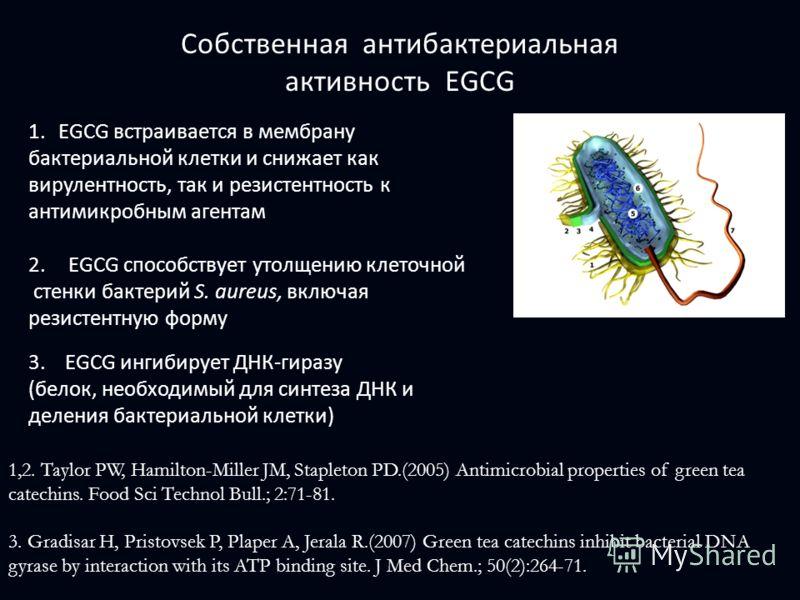 1.EGCG встраивается в мембрану бактериальной клетки и снижает как вирулентность, так и резистентность к антимикробным агентам 2.EGCG способствует утолщению клеточной стенки бактерий S. aureus, включая резистентную форму 3. EGCG ингибирует ДНК-гиразу