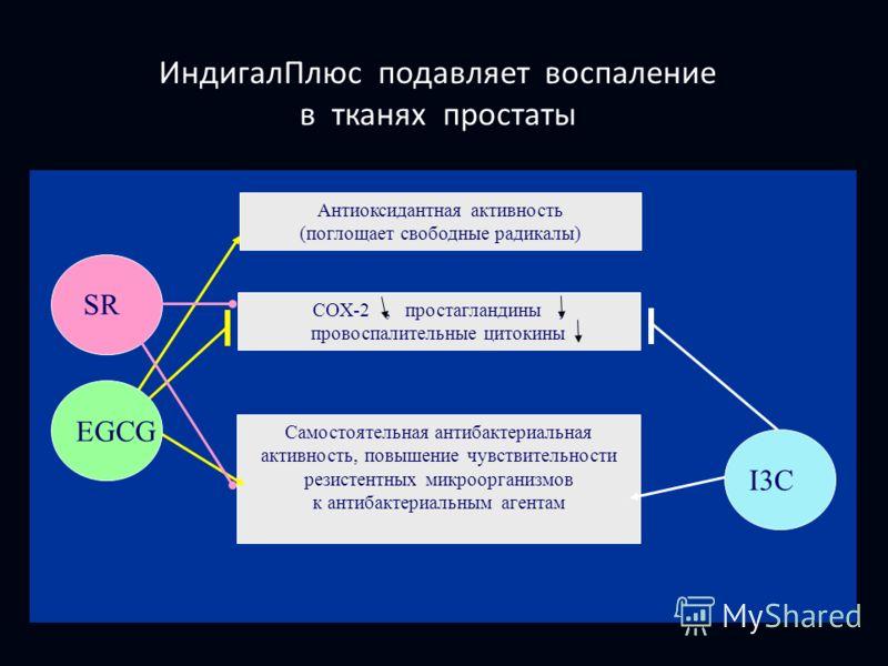 ИндигалПлюс подавляет воспаление в тканях простаты Антиоксидантная активность (поглощает свободные радикалы) Самостоятельная антибактериальная активность, повышение чувствительности резистентных микроорганизмов к антибактериальным агентам EGCG I3C CO