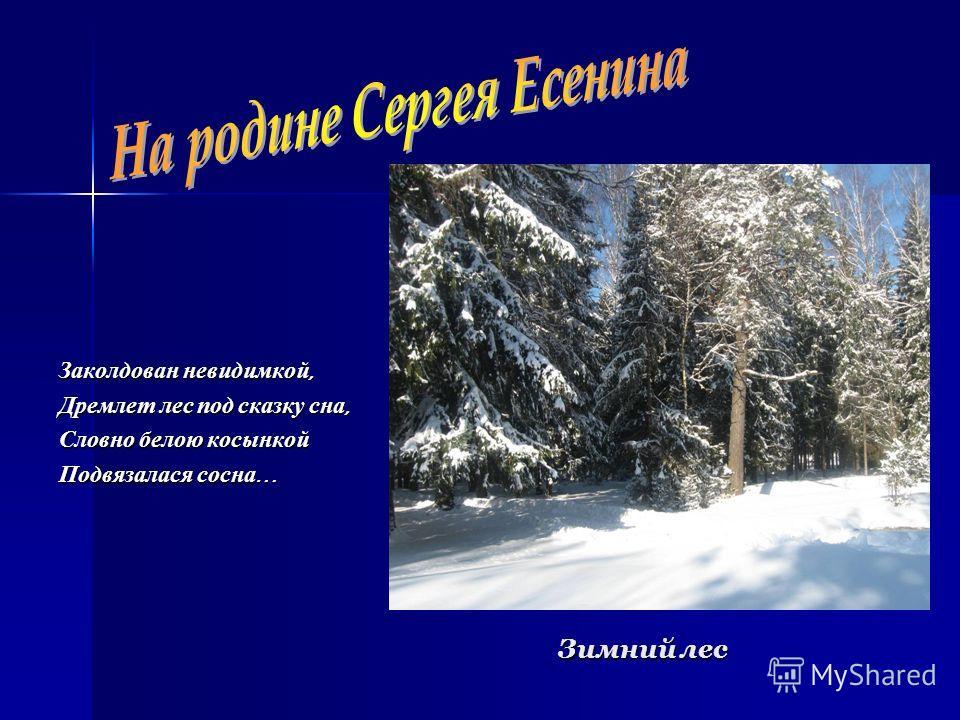 Зимний лес Заколдован невидимкой, Дремлет лес под сказку сна, Словно белою косынкой Подвязалася сосна …
