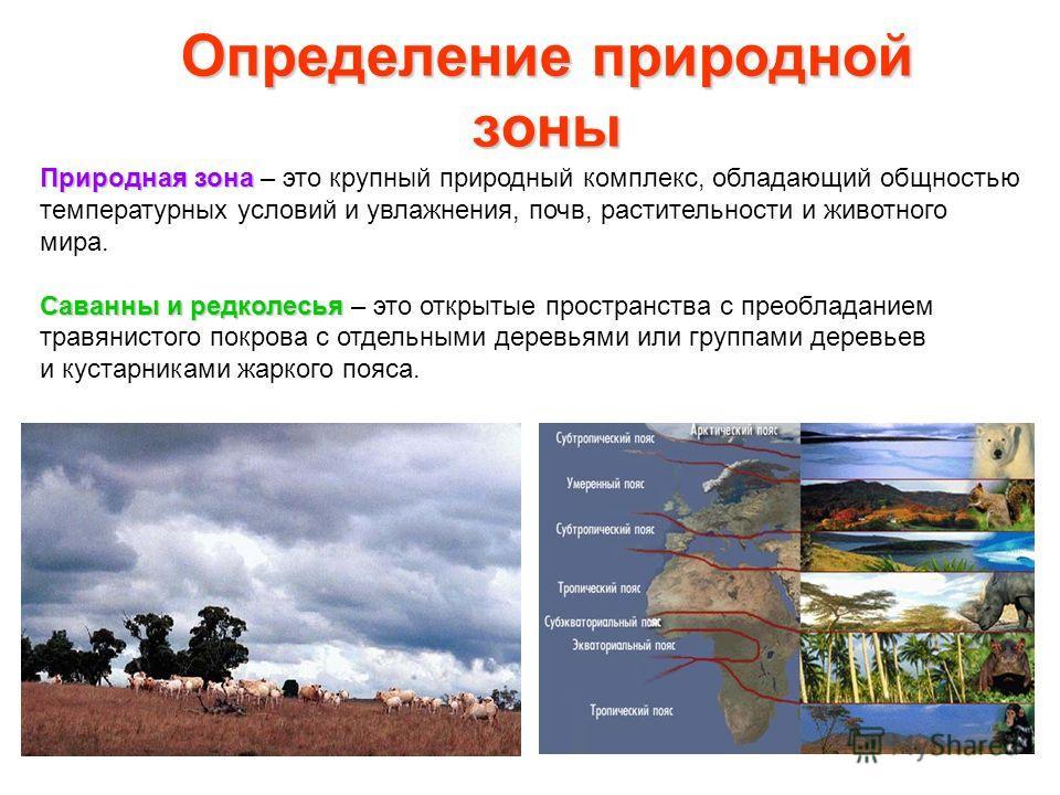 Определение природной зоны Природная зона Природная зона – это крупный природный комплекс, обладающий общностью температурных условий и увлажнения, почв, растительности и животного мира. Саванны и редколесья Саванны и редколесья – это открытые простр