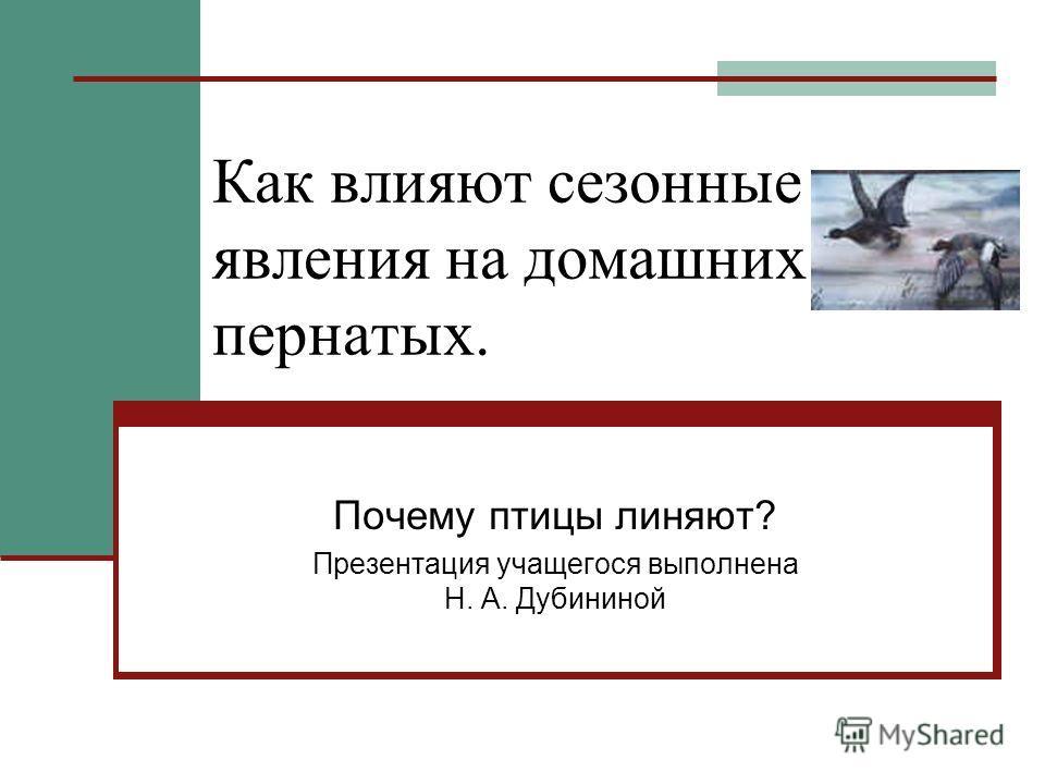 Как влияют сезонные явления на домашних пернатых. Почему птицы линяют? Презентация учащегося выполнена Н. А. Дубининой