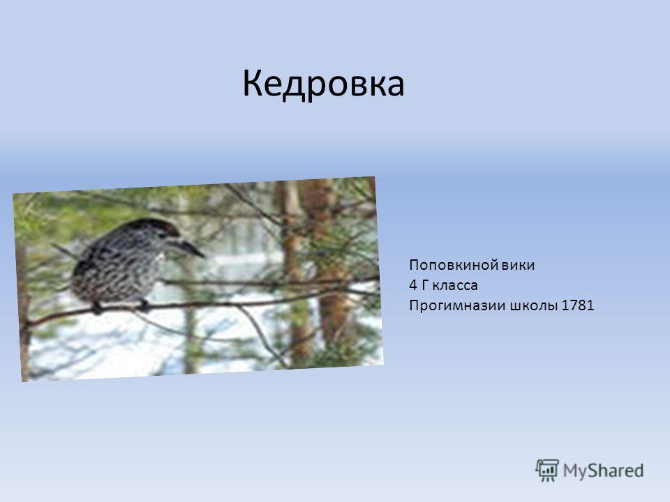 Кедровка Поповкиной вики 4 Г класса Прогимназии школы 1781