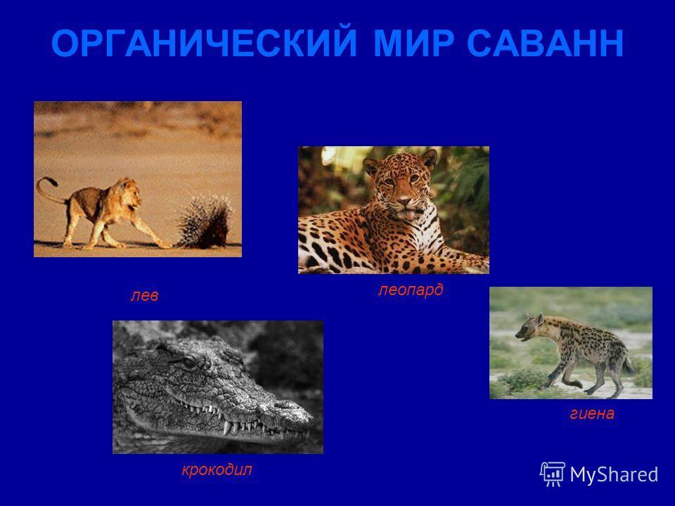 ОРГАНИЧЕСКИЙ МИР САВАНН леопард лев гиена крокодил