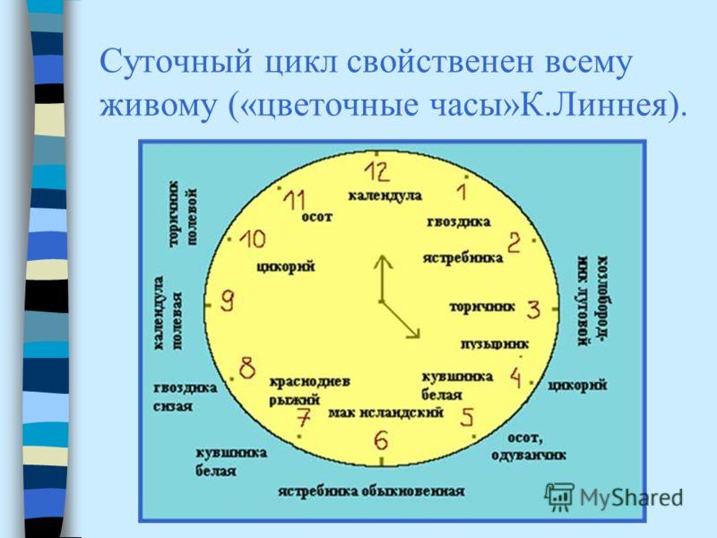 Суточный цикл свойственен всему живому («цветочные часы»К.Линнея).