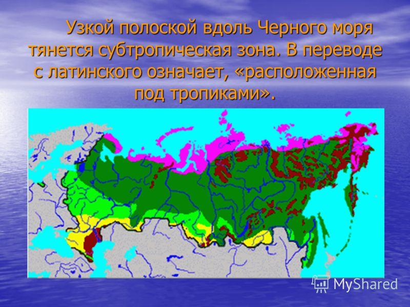 Узкой полоской вдоль Черного моря тянется субтропическая зона. В переводе с латинского означает, «расположенная под тропиками». Узкой полоской вдоль Черного моря тянется субтропическая зона. В переводе с латинского означает, «расположенная под тропик