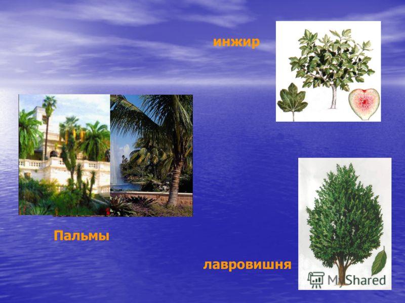 Пальмы инжир лавровишня