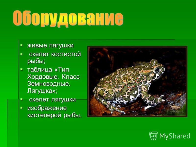живые лягушки живые лягушки скелет костистой рыбы; скелет костистой рыбы; таблица «Тип Хордовые. Класс Земноводные. Лягушка»; таблица «Тип Хордовые. Класс Земноводные. Лягушка»; скелет лягушки скелет лягушки изображение кистеперой рыбы. изображение к