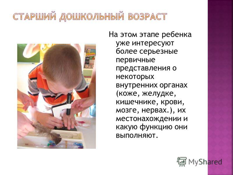 На этом этапе ребенка уже интересуют более серьезные первичные представления о некоторых внутренних органах (коже, желудке, кишечнике, крови, мозге, нервах.), их местонахождении и какую функцию они выполняют.