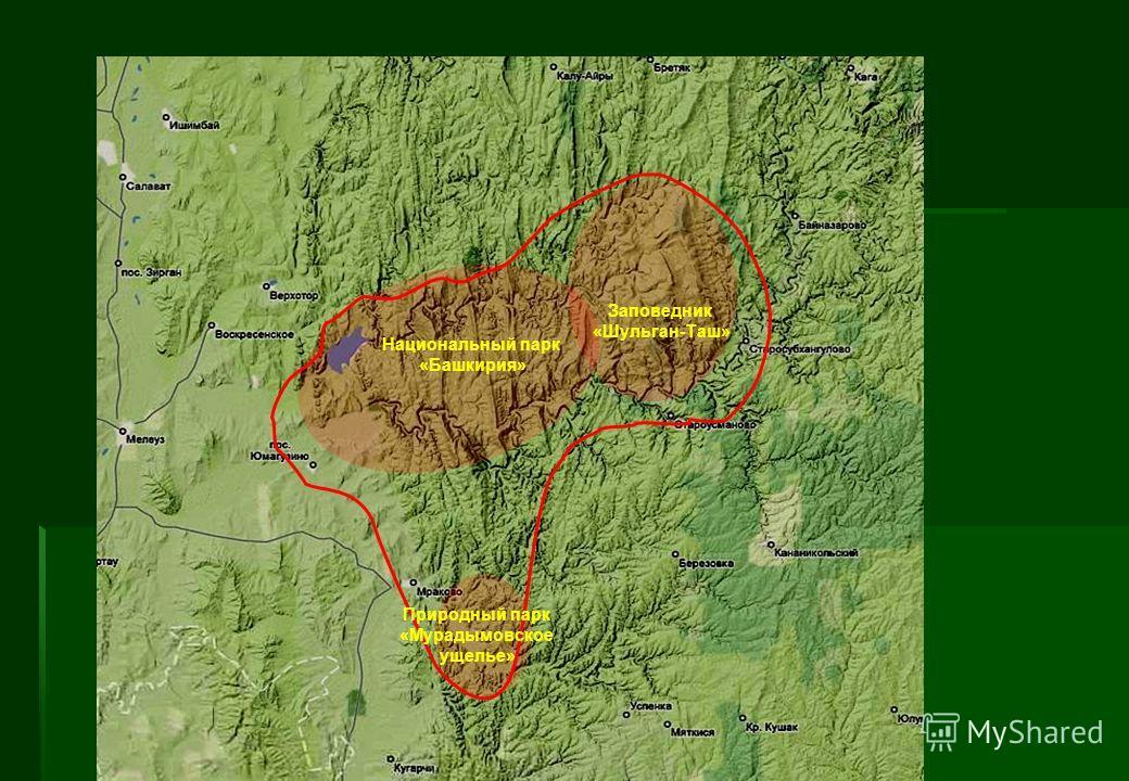 Природный парк «Мурадымовское ущелье» Заповедник «Шульган-Таш» Национальный парк «Башкирия»
