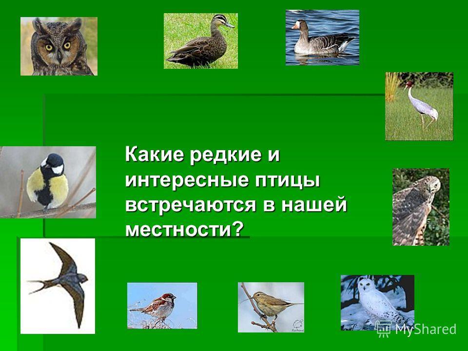 Какие редкие и интересные птицы встречаются в нашей местности?