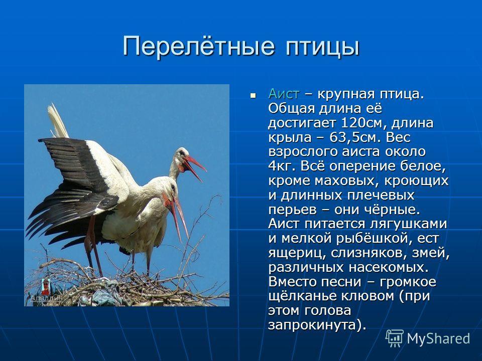 Перелётные птицы Аист – крупная птица. Общая длина её достигает 120см, длина крыла – 63,5см. Вес взрослого аиста около 4кг. Всё оперение белое, кроме маховых, кроющих и длинных плечевых перьев – они чёрные. Аист питается лягушками и мелкой рыбёшкой,