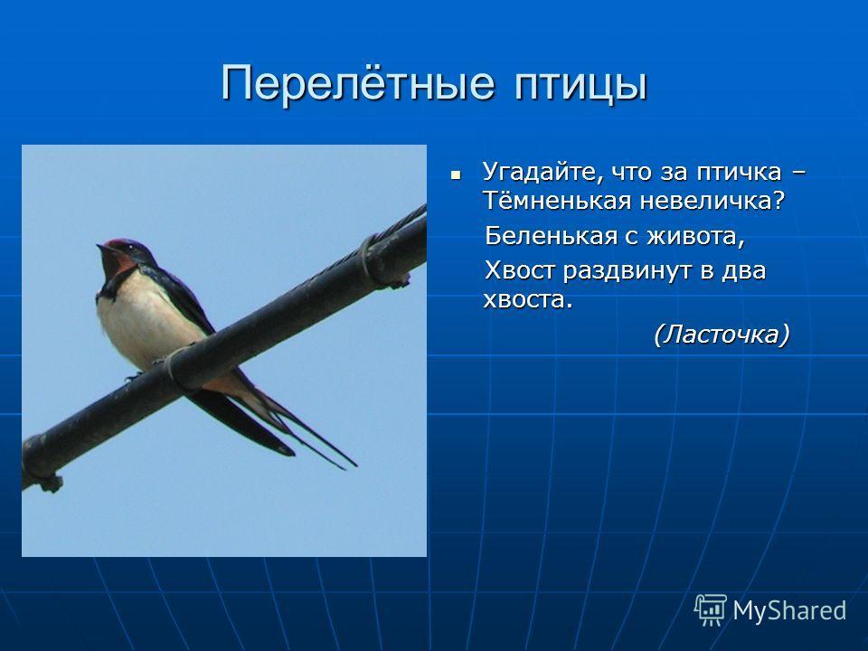 Перелётные птицы Угадайте, что за птичка – Тёмненькая невеличка? Угадайте, что за птичка – Тёмненькая невеличка? Беленькая с живота, Беленькая с живота, Хвост раздвинут в два хвоста. Хвост раздвинут в два хвоста. (Ласточка) (Ласточка)