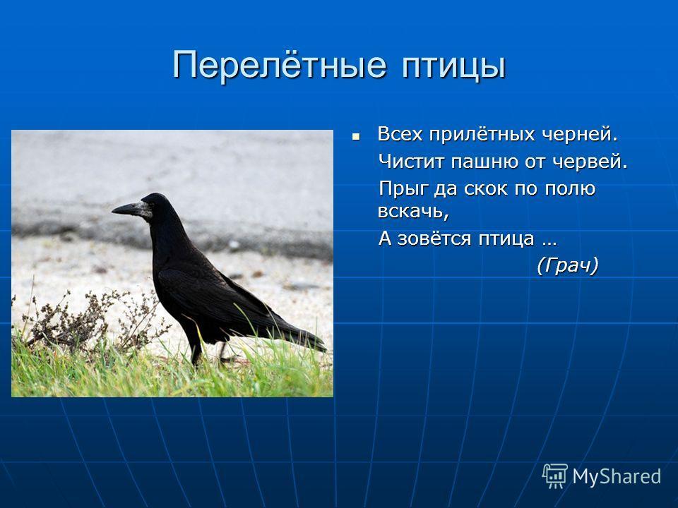 Перелётные птицы Всех прилётных черней. Всех прилётных черней. Чистит пашню от червей. Чистит пашню от червей. Прыг да скок по полю вскачь, Прыг да скок по полю вскачь, А зовётся птица … А зовётся птица … (Грач) (Грач)