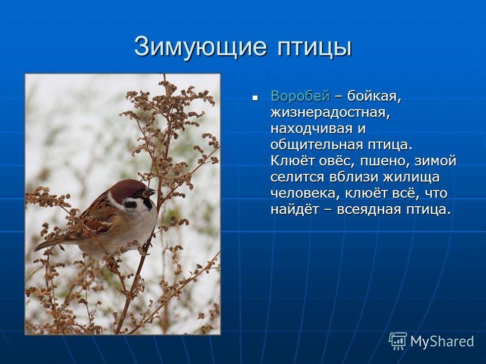 Зимующие птицы Воробей – бойкая, жизнерадостная, находчивая и общительная птица. Клюёт овёс, пшено, зимой селится вблизи жилища человека, клюёт всё, что найдёт – всеядная птица. Воробей – бойкая, жизнерадостная, находчивая и общительная птица. Клюёт