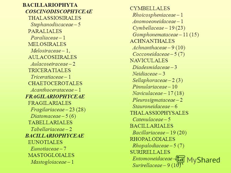 BACILLARIOPHYTA COSCINODISCOPHYCEAE THALASSIOSIRALES Stephanodiscaceae – 5 PARALIALES Paraliaceae – 1 MELOSIRALES Melosiraceae – 1, AULACOSEIRALES Aulacoseiraceae – 2 TRICERATIALES Triceratiaceae – 1 CHAETOCEROTALES Acanthocerataceae – 1 FRAGILARIOPH
