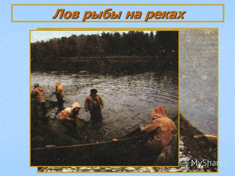 Лов рыбы на реках