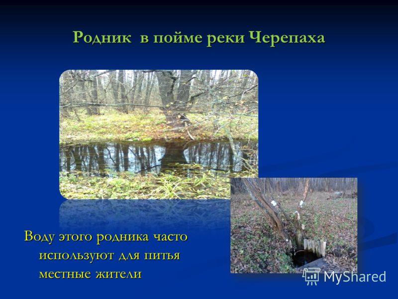 Родник в пойме реки Черепаха Воду этого родника часто используют для питья местные жители