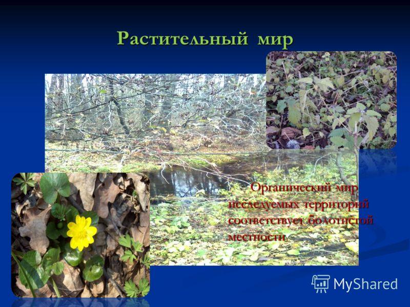 Растительный мир Органический мир исследуемых территорий соответствует болотистой местности