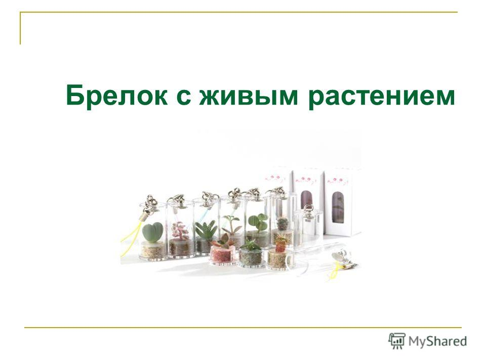 Брелок с живым растением