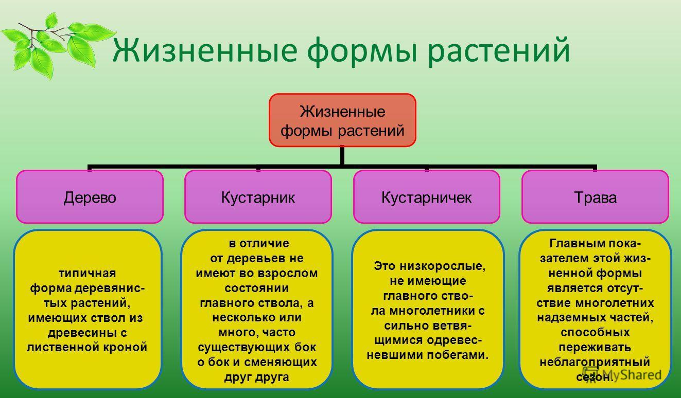 презентация о признаках растений отдела водоросли