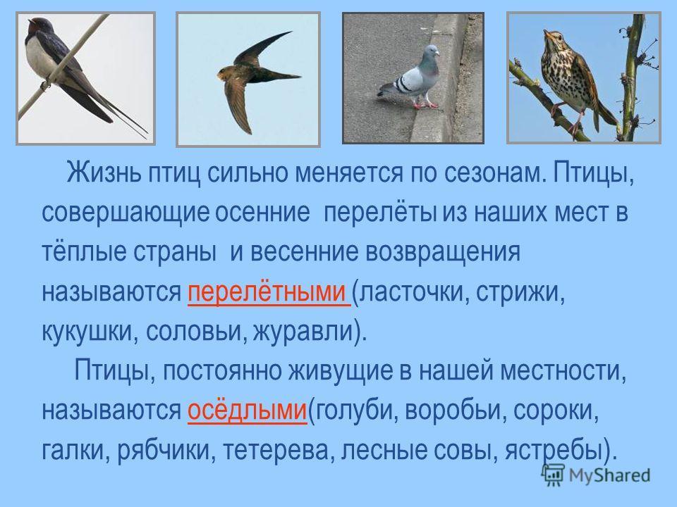 Жизнь птиц сильно меняется по сезонам. Птицы, совершающие осенние перелёты из наших мест в тёплые страны и весенние возвращения называются перелётными (ласточки, стрижи, кукушки, соловьи, журавли). Птицы, постоянно живущие в нашей местности, называют